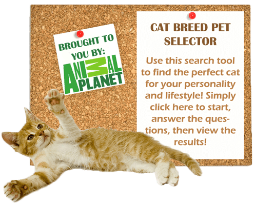 cat-breed-pet-selector