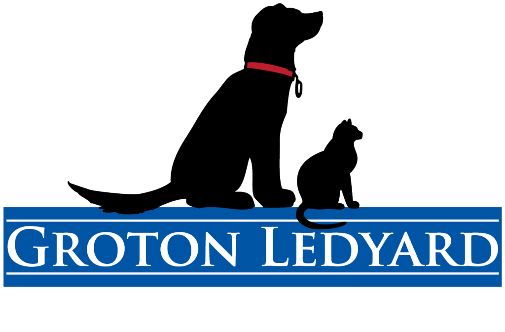 Veterinarian In Ledyard, CT
